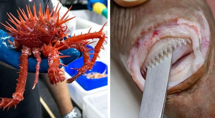 Gli scienziati hanno pubblicato le foto degli animali che vivono nelle profondità dei mari: sono spaventose