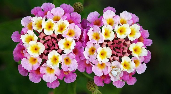 Vous avez la main verte ? Voici 9 types de plantes qui vous donneront de belles fleurs malgré le soleil brûlant.