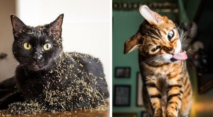 Un fotografo ritrae i gatti alle prese con l'erba gatta: le loro espressioni di estasi sono uno spasso!