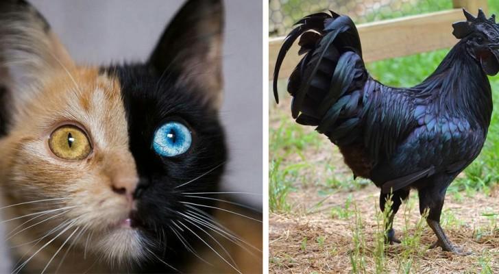 20 fois où Dame Nature a voulu donner une touche de couleur inhabituelle à ses créatures