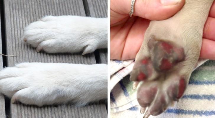 I veterinari raccomandano di fare questo test di 9 secondi prima di far camminare il tuo cane sotto il sole