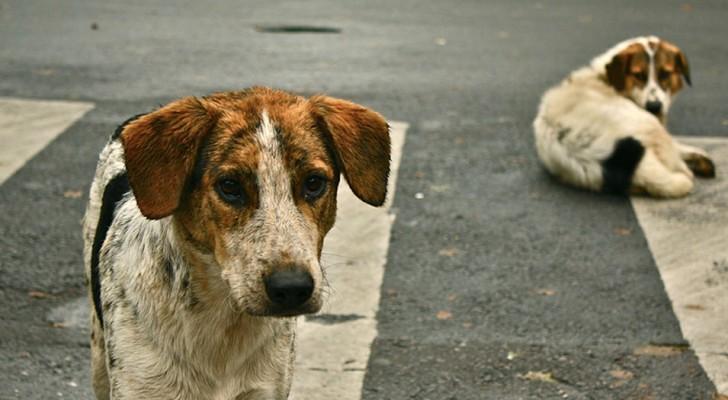 Come l'Olanda è riuscita a risolvere il problema dei cani randagi
