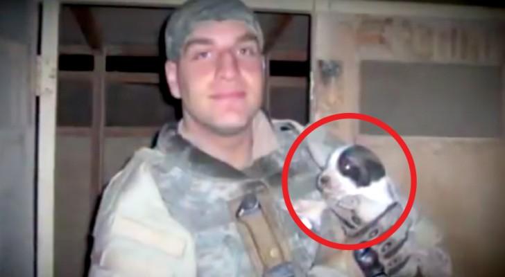 I genitori adottano il cane del figlio defunto: durante un filmato notano un segnale inconfondibile