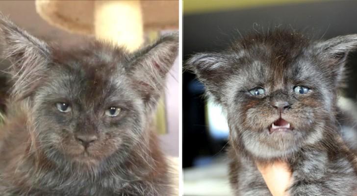 Diese Katze mit menschlichem Gesicht ist das Seltsamste, was du heute sehen wirst: Diese Fotos sind auf der ganzen Welt zu sehen