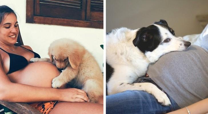 17 foto's van honden en katten die vol spanning en liefde hun toekomstige baasjes opwachten