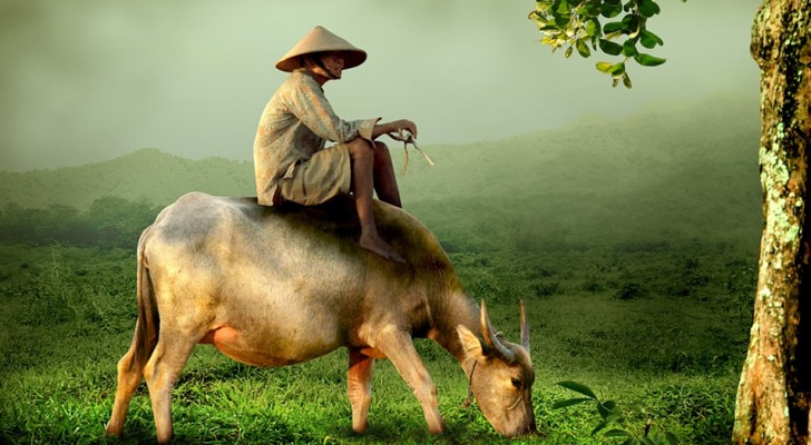 La parabola del campesino: la historia china que todos deberiamos leer antes que cualquier cosa de feo ocurra