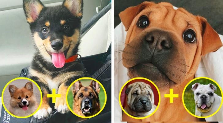 14 cani nati dall'incrocio di 2 razze, che sono la cosa più dolce che vedrete oggi