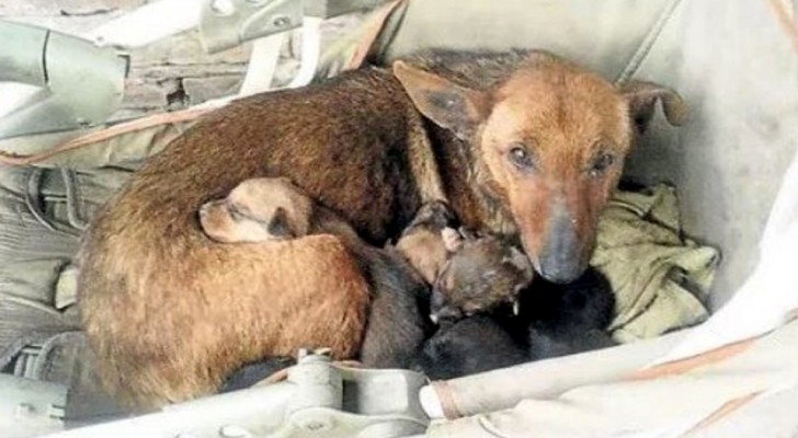 A woman notices a stray dog ​​with puppies and shortly thereafter she discovers that a baby is hiding among them