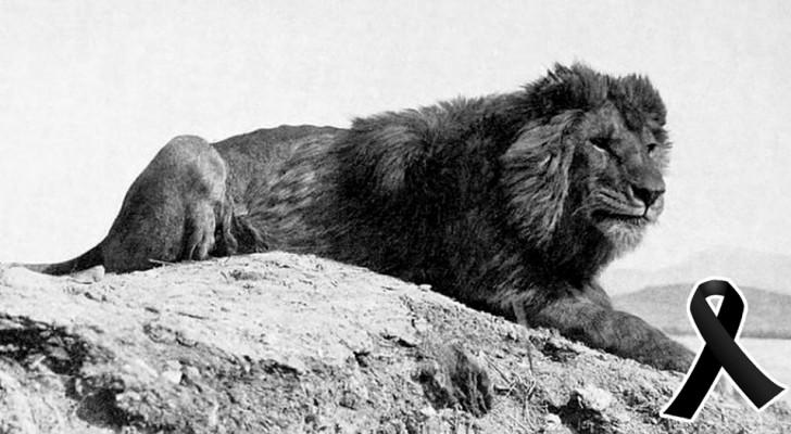 10 affascinanti specie animali che si sono estinte nell'ultimo secolo, a causa dell'uomo