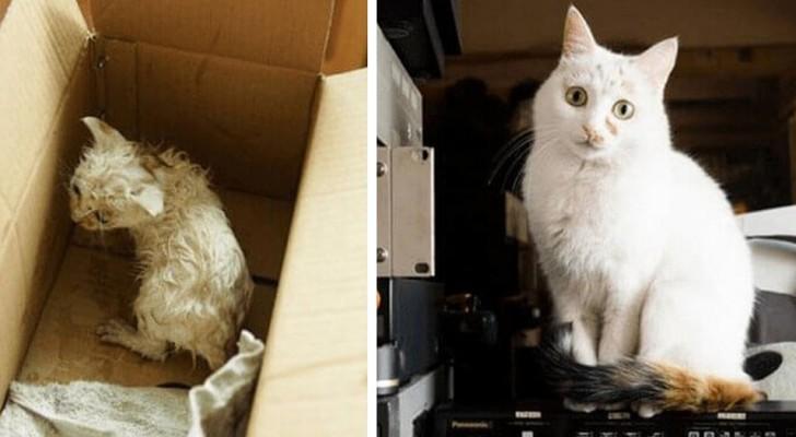 16 immagini di gatti prima e dopo l'adozione che vi scalderanno il cuore