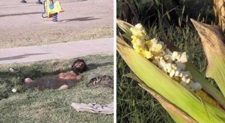 15 foto di cose strane che possono accadere solo quando fa DAVVERO molto caldo