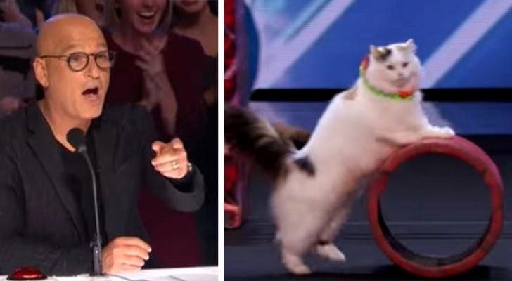 Questi gatti super-acrobatici eseguono un'esibizione che manda in delirio tutto lo studio