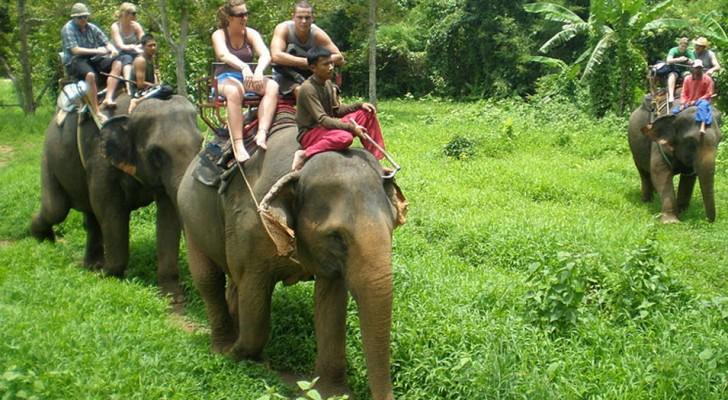 Nel sud-est asiatico, i cuccioli di elefante separati dalle madri e sottomessi all'uomo per il 'Bene' del turismo