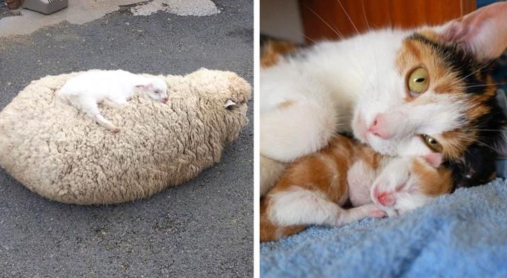 15 foto che ci dimostrano che senza la mamma questo mondo non sarebbe un posto così accogliente