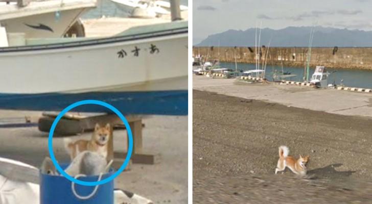 Le travail de Google Street View gâché par un chien : il apparaît dans tous les photogrammes pris