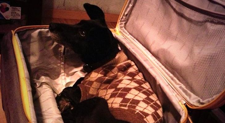 Porta il cane in ospedale nascosto in una valigia così sua moglie malata può abbracciarlo per l'ultima volta