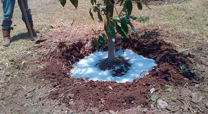 Voici la Pluie Solide qui peut révolutionner l'agriculture et lutter contre la sécheresse