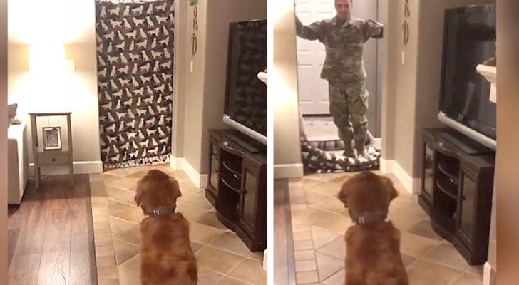 A soldier returns home after nine months and it is a lovely surprise for his dog