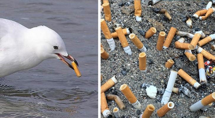 I mozziconi di sigaretta sono il tipo di rifiuto che vanta più unità disperse in natura