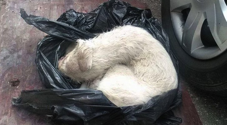 Someone put her in a plastic bag like garbage and threw her away --- until luckily someone saw her!