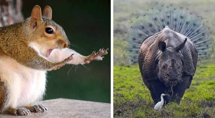 Les 15 photos d'animaux les plus hilarantes de 2018 : voici le côté le plus drôle de la nature