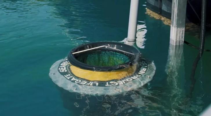 Installati dei bidoni mangia-plastica per ripulire i porti italiani: ecco tutti i dettagli del progetto