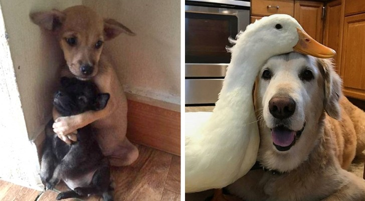 16 photos of animal friendships ... so curious and strange as to seem unreal!