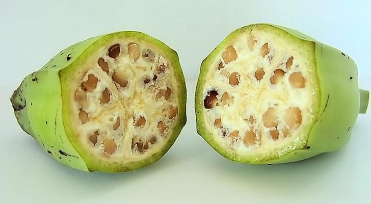 Ecco l'aspetto bizzarro di alcuni frutti prima che venissero addomesticati dall'uomo