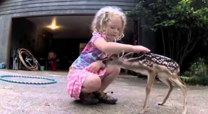 A Little Deer wants to make a new friend