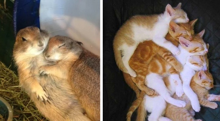 11 examples of animal love and affection that can brighten even the darkest day
