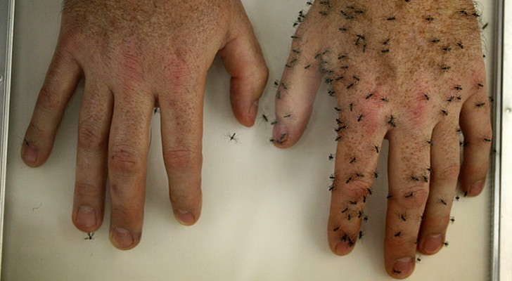 6 natural remedies to protect your body and to permanently keep mosquitoes away from you!