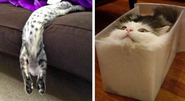 These 20 funny images demonstrate that cats are made of a liquid material ...