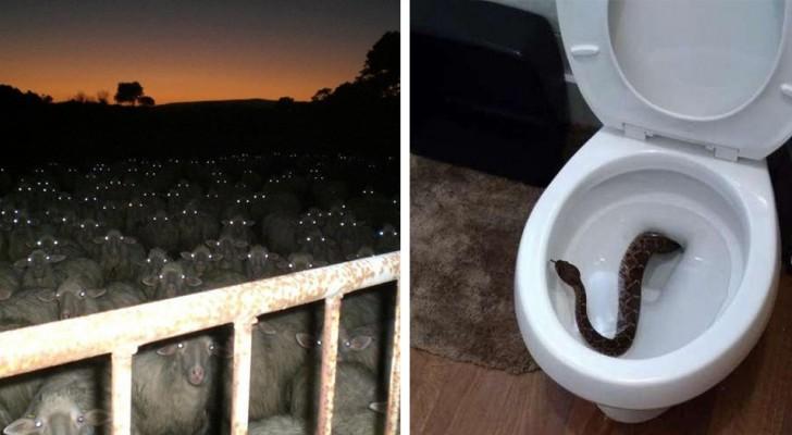 Diese 14 Fotos sind so erschreckend, dass selbst der hartgesottenste Naturliebhaber nicht in der Lage sein wird, sie anzusehen.