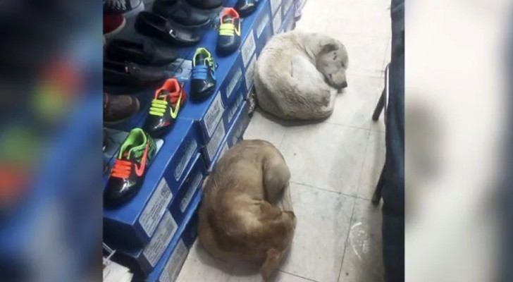 A shoe store has opened its doors to stray dogs to protect them from the cold and rain