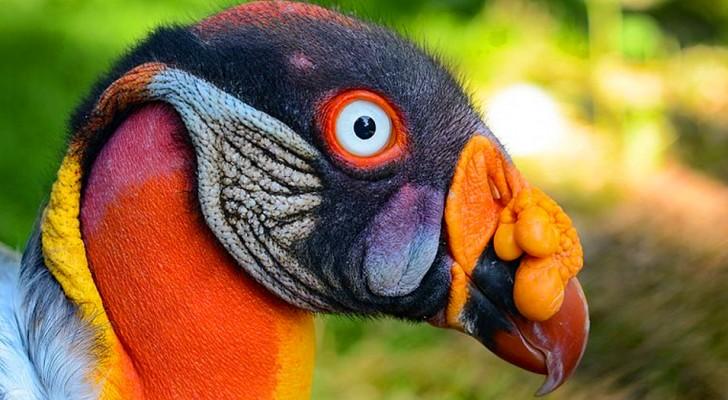 10 oiseaux vraiment existants qui semblent venir d'une autre planète