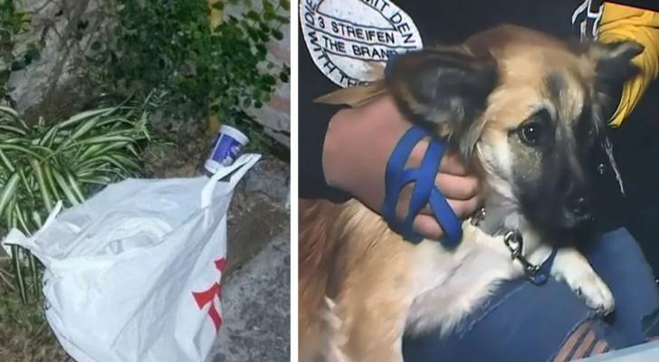 Een hond vindt een tas en trekt de aandacht van zijn baasjes: hij zal een onschuldig leven redden