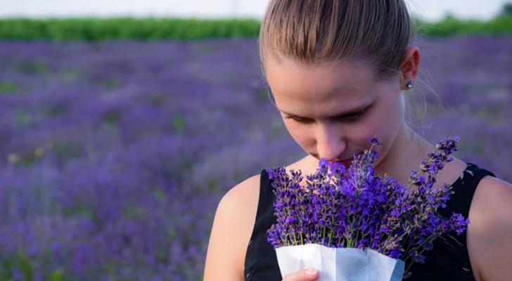 La lavanda è il profumo che dissolve l'ansia: lo scoprono dei ricercatori giapponesi