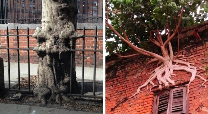 22 veerkrachtige bomen die zich niet lieten tegenhouden door het cement in een stad