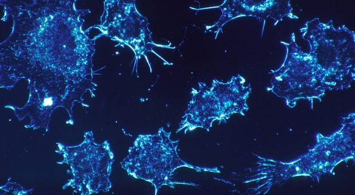Der Code der Selbstzerstörung von Krebszellen wurde entdeckt: Chemo könnte in Rente gehen