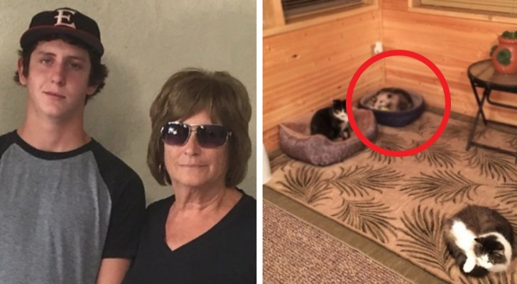 A grandmother welcomes a new stray cat into the house, but her grandson reveals that it is actually an opossum