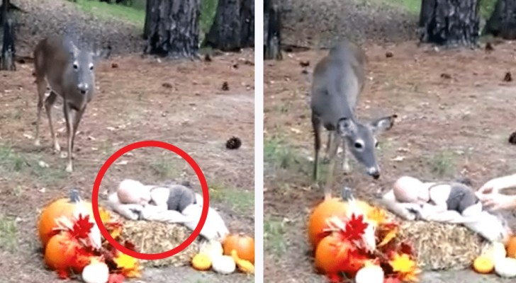 Stanno facendo delle foto al neonato vicino al bosco... ma quando arriva un cervo avviene qualcosa di magico