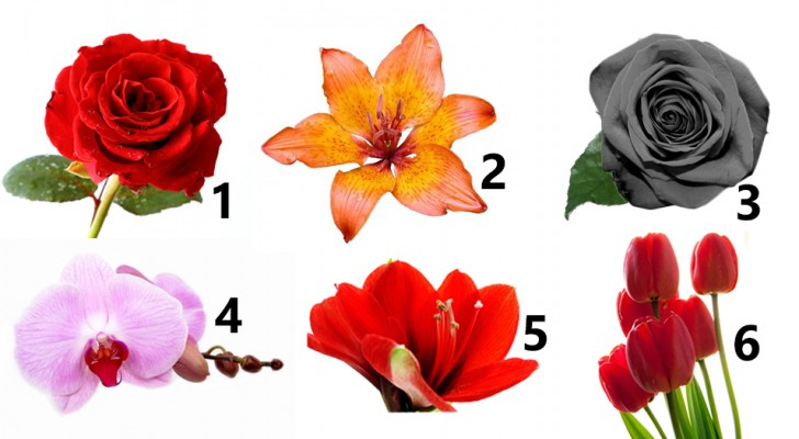 Which flower attracts you the most? Find out what it reveals about your personality