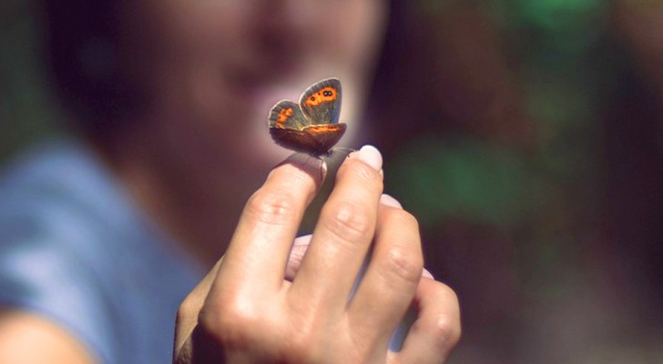 If you often encounter butterflies it means that they are there to tell you something