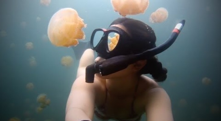 Se avete il terrore delle meduse non guardate questo video