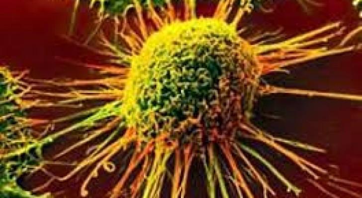 Forscher haben einen natürlichen Killer von Krebszellen entdeckt, und jetzt versuchen sie, ihn zu potenzieren.