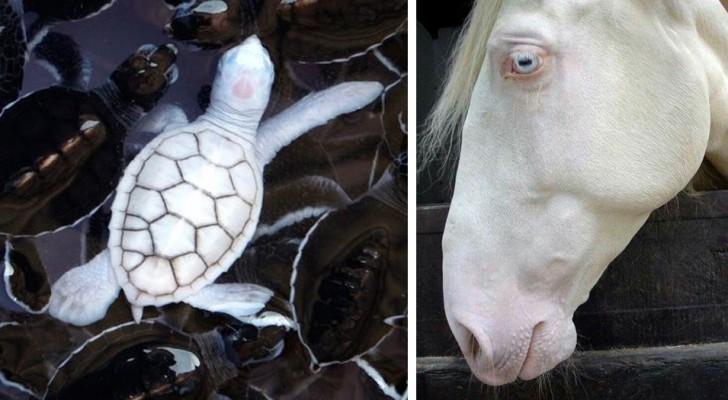 23 foto's van hele zeldzame albinodieren die je niet snel in het echt zult zien