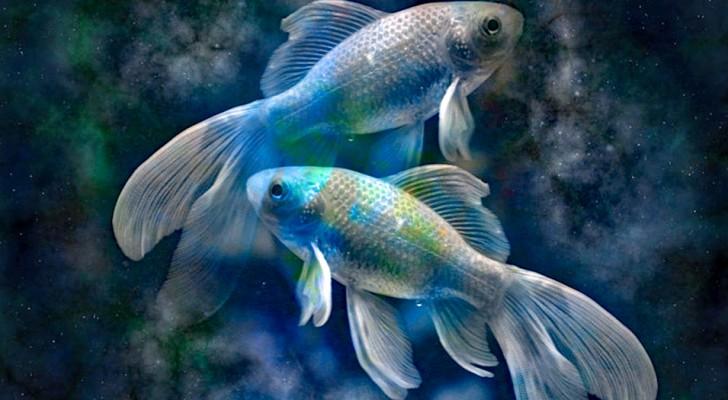 Fische: das großzügigste Sternzeichen des Tierkreises.