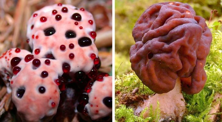 8 types de champignons qui ressemblent davantage à des créatures extraterrestres