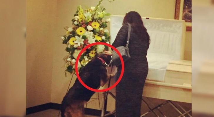 Efter sin husses död vägrar hunden att äta, men under begravningen sker något magiskt