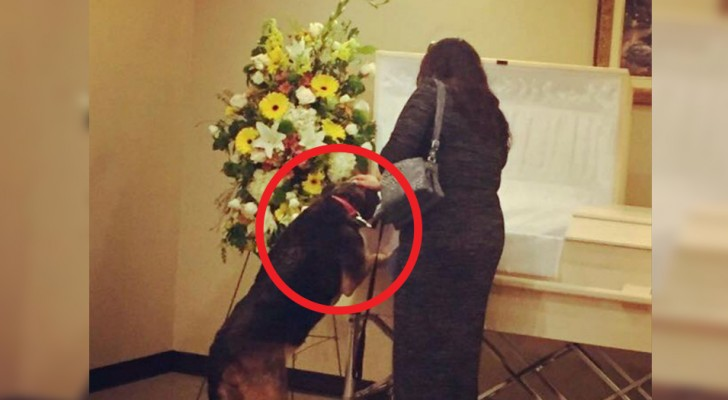 Depois da morte de seu dono o cachorro se recusava a comer: durante o funeral acontece algo